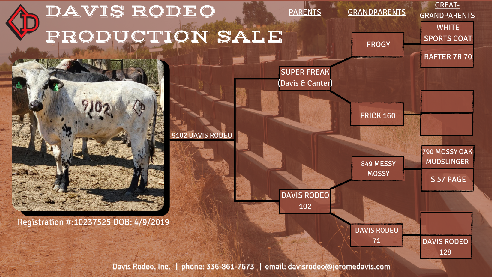Davis Rodeo 9102 bull available during the March 2021 production sale